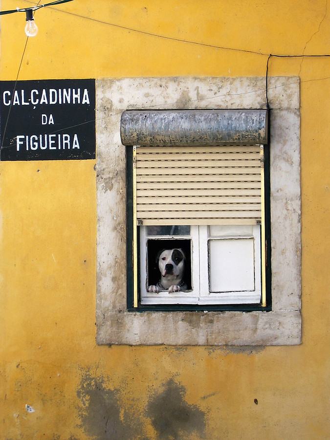 Alfama Dog in Window Calcadinha da Figuera Menega Sabidussi